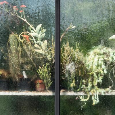 Greenhouse #12595-S7