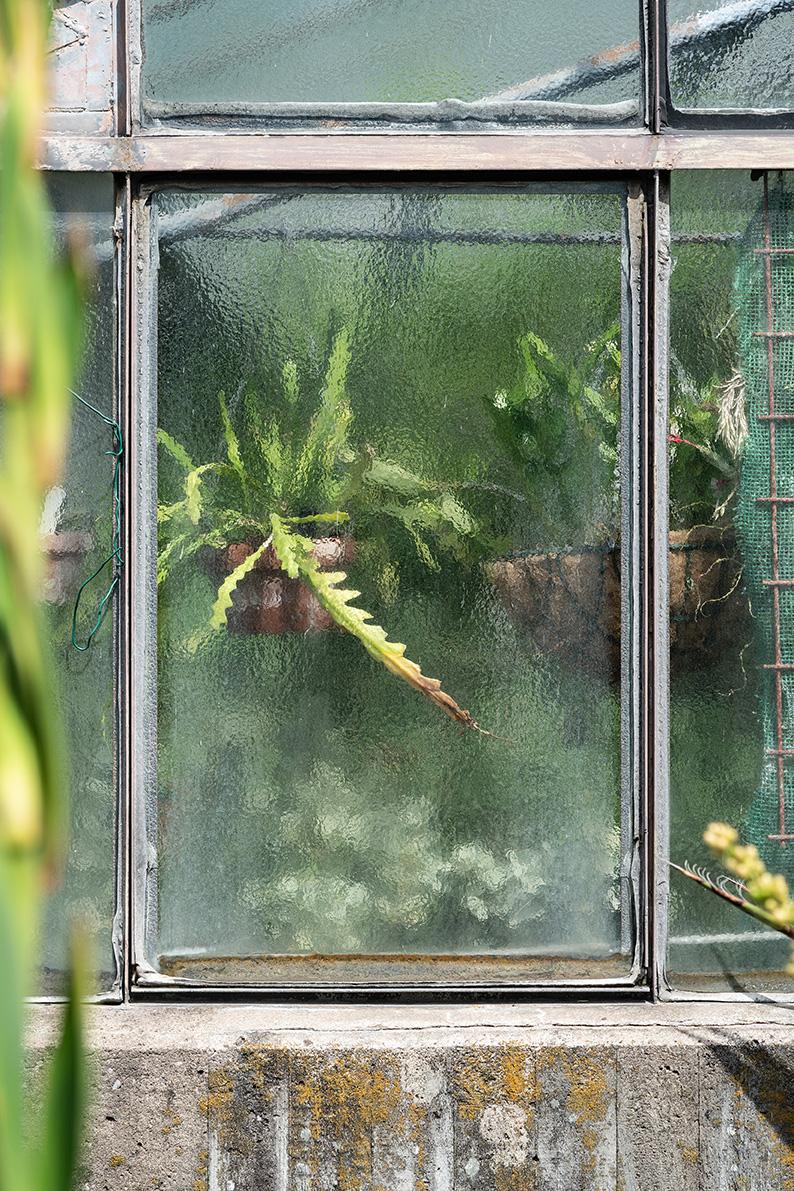 Greenhouse #12455-S7