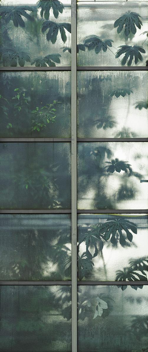 Greenhouse #12886-S7