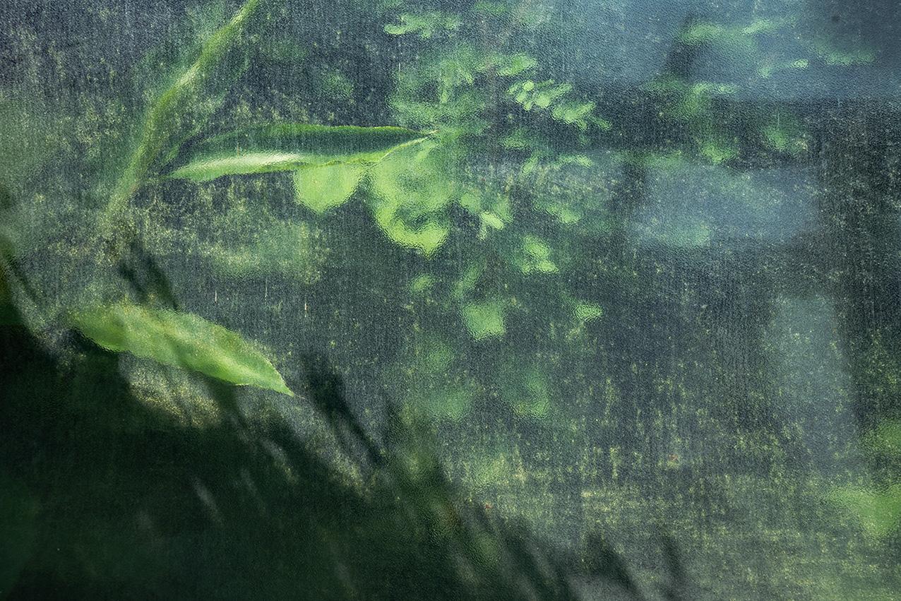 Greenhouse #12554-S7